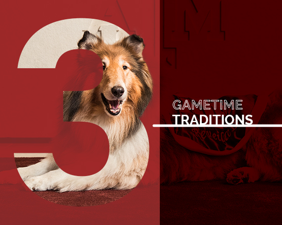 graphic of number 3 overlaying a collie